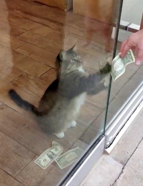 kaķis kā nopelnīt daudz naudas tirdzniecības apmācības kurss no nulles