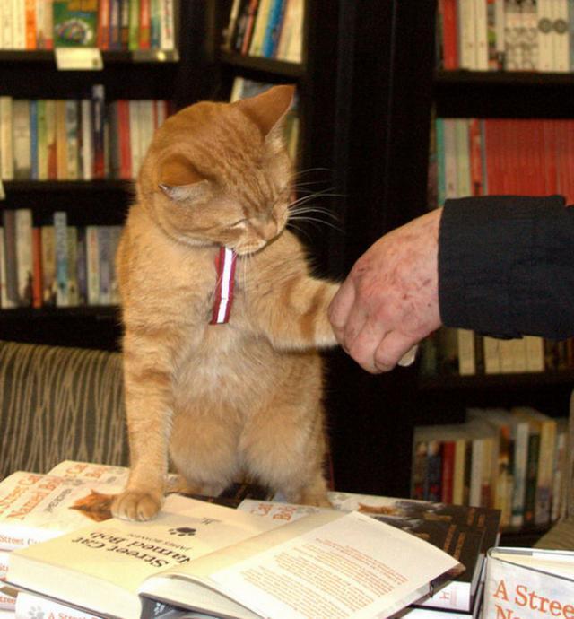 kaķis kā nopelnīt daudz naudas papildu ienākumi kā nopelnīt